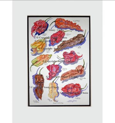 Devon Chilli Man Art Print