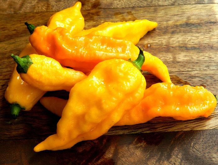 Bhut yellow chilli