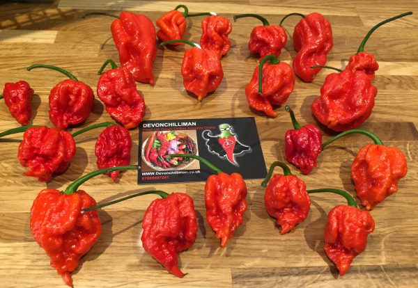Fresh Carolina Reaper Chillis